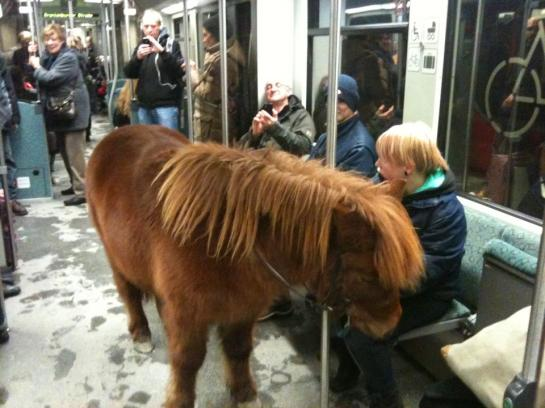 Pony on the S-bahn train in Berlin. All rights reserved by: Jarkko Riihimäki